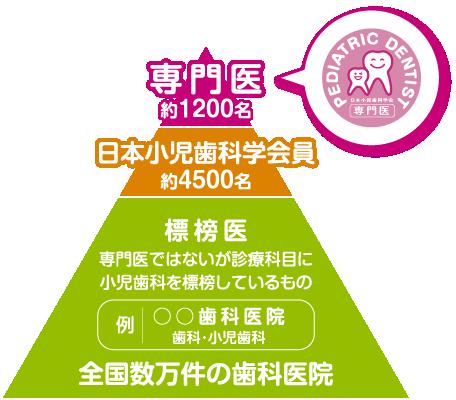 小児歯科専門医図式
